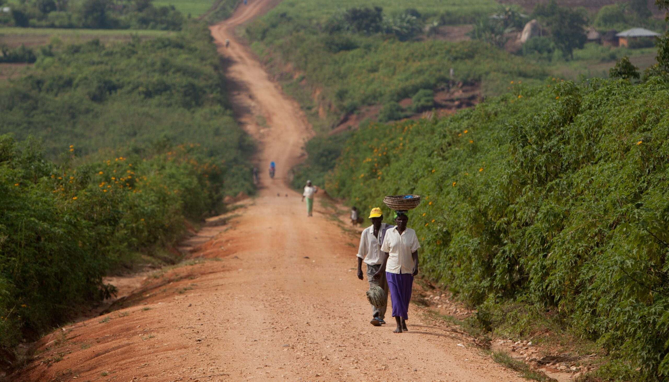 people walking on dirt road with greenery on sides